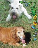 Jazz and Angus in Seminole